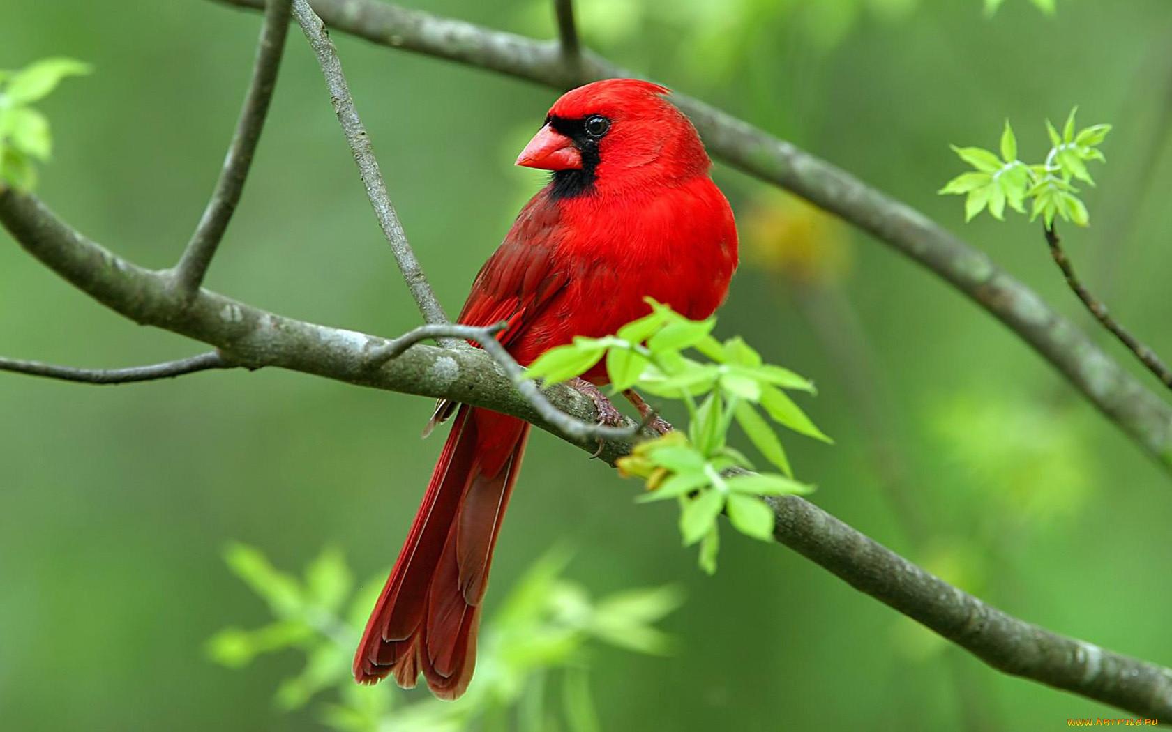 Смотреть картинки животных и птиц